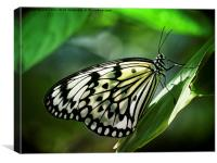 Rice Paper Butterfly, Canvas Print