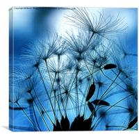 Dandelion Seed Abstract, Canvas Print