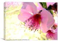Peach Blossom, Canvas Print