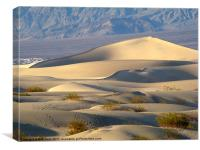 Death Valley Dunes, Canvas Print