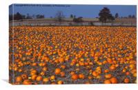 Pumpkin Patch, Canvas Print