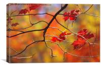 The Glory of Fall, Canvas Print