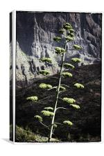 Agave flower, Canvas Print