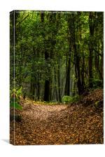 Woodland path., Canvas Print