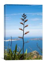 Phormium tenax flax, Canvas Print