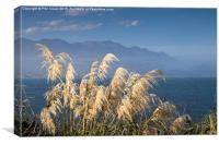 Austroderia grass, Canvas Print