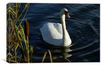 Swan and Bullrushes, Canvas Print