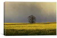 Stormy sky over rape field, Canvas Print