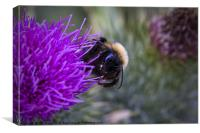 Bee on a thistle, Canvas Print