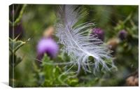 White feather caught in a web, Canvas Print