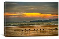 Oystercatchers on the beach, Canvas Print