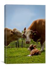 Kissin cows, Canvas Print