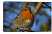 Robin in winter sunshine, Canvas Print