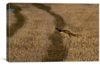 Pheasant in flight, Canvas Print