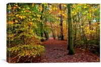 Autumn Woodland, Canvas Print