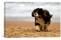 Little dog, windy beach, Canvas Print