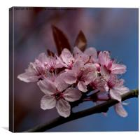 Pastel shades of Spring, Canvas Print