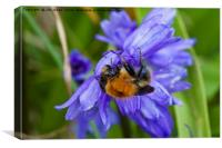 Bumblebee and Bluebells, Canvas Print