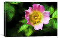 Artistic Rose, Canvas Print