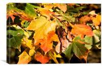 Autumn Colours, Canvas Print