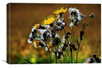 Ragwort Life Cycle with artistic filter, Canvas Print