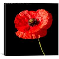 Remembrance Poppy, Canvas Print