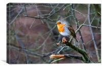 Winter Robin, Canvas Print