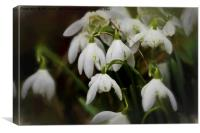Simply Smudged Snowdrops, Canvas Print