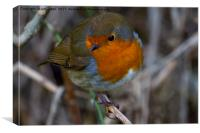 Cheeky Chirper, Canvas Print