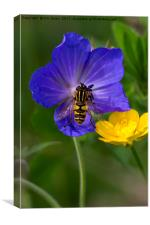Cranesbill, Buttercup and Hoverfly, Canvas Print