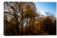 Sunlit Woodland, Canvas Print