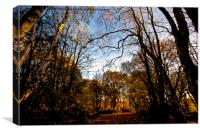 Sunlit Woodland (2), Canvas Print
