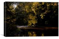 Autumn Sunshine and Shadow, Canvas Print
