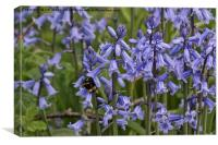 English Bluebells and a Bee, Canvas Print