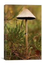 Wild Mushroom and heather, Canvas Print