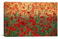 In Flanders fields, Canvas Print