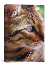 Cats-eye!, Canvas Print