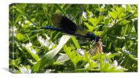 stunning dragonfly feeding., Canvas Print
