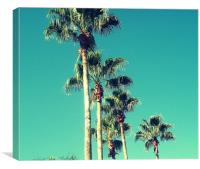 Florida Palms., Canvas Print