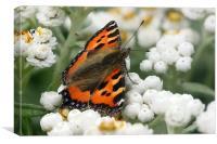 Butterfly - Small Tortoiseshell, Canvas Print