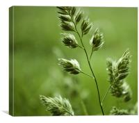 Wild Grass, Canvas Print