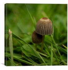 Fungi, Canvas Print