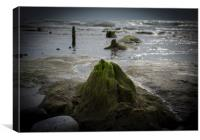 Submerged Ancient Forest, Borth Beach, Canvas Print