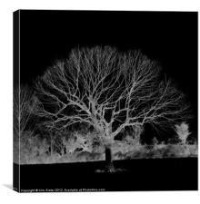 The Skeleton Tree, Canvas Print