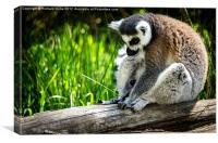 Thinking Lemur, Canvas Print