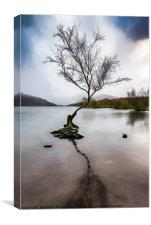 Lone Tree Llanberis Lake, Canvas Print