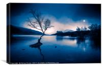 Padarn Tree Snowdonia, Canvas Print