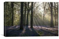 Dawn in the bluebell woods 1, Canvas Print
