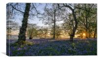 Dawn in the bluebell woods 3, Canvas Print