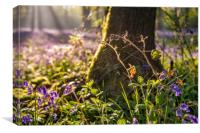 Dawn in the bluebell woods 4, Canvas Print